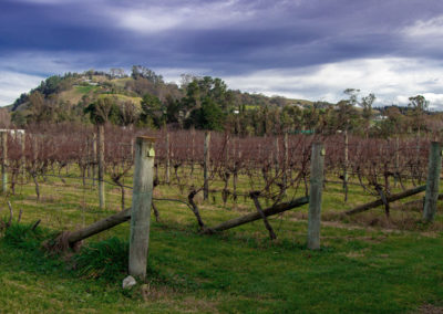 winery tours hawkes bay - vines